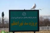 مرغان دریایی در رودخانه خشک شیراز
