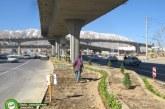 گزارش تصویری : زیباسازی پل طبقاتی معالی آباد