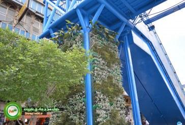 عکس : ایجاد ستون سبز بر روی پل عابرپیاده چهارراه زند