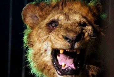 در باغ وحش شیراز، توحش را جای حیات وحش جا میزنند و میفروشند! +فیلم