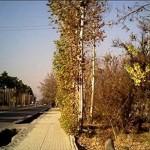 احیاء هویت منطقه قصردشت شیراز