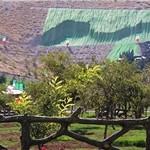 شهرداری شیراز باید سالی ۳ پارک بسازد