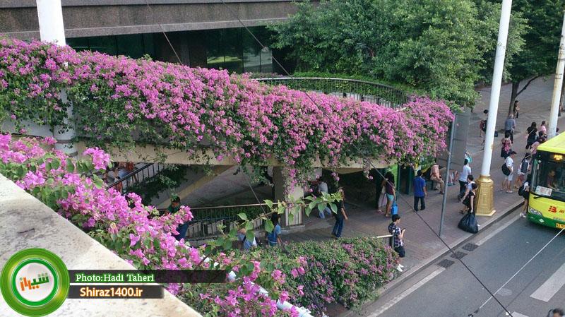 پل عابر پیاده در چین