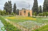 شیراز میزبان مناسبی برای پایتختی جوانان جهان اسلام خواهد بود