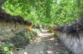 هدفگذاری احداث پارک یکهزار هکتاری در مرکز شیراز