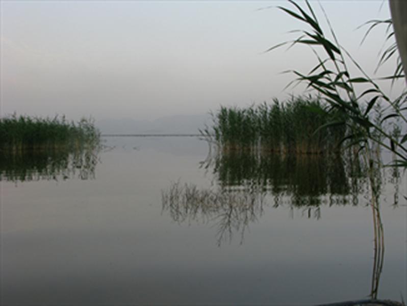 بارشهای اخیر فارس و امید به احیاء «پریشان» / نهرها به سوی تالاب جاری شد