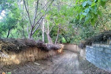 شهردار شیراز : سرانه فضای سبز شیراز پایان سال آینده ۲۵ متر مربع خواهد شد