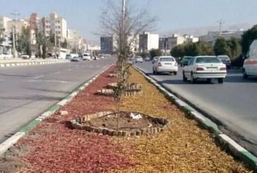 عکس : حذف چمن از فضای سبز شیراز