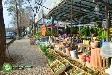 گزارش تصویری : بازار گل و گیاه قصردشت