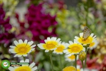 گزارش تصویری : جلوه های اردیبهشت دل انگیز شیراز در باغ نظر