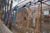 باغ وحش شیراز به حمایت جدی مسوولان نیاز دارد