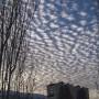 غروب زمستانی شیراز