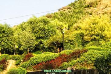 ۱۳ هزار هکتار از اراضی اطراف شیراز سبز میشود