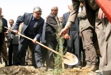 شهردار شیراز: درختکاری ۶۰۰ هکتار از ارتفاعات شیراز