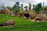 جاذبه جدید گردشگری شیراز با بازسازی اصولی باغ وحش شیراز
