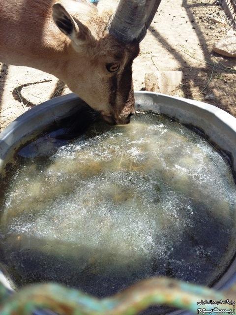 وضعیت بهداشتی ظرف آب