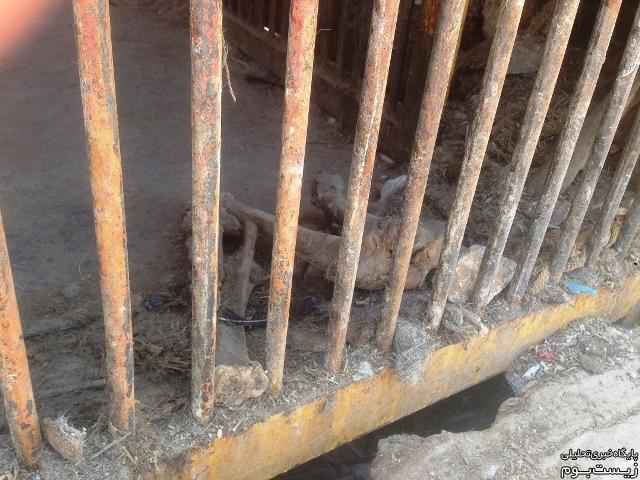 وضعیت بهداشتی قفس شیرها!