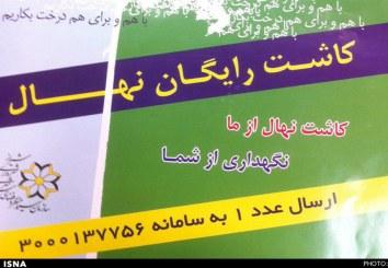 کاشت یک میلیون درخت در ارتفاعات شیراز
