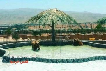 گزارشی از روند بازسازی باغ وحش شیراز