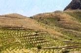 باغ های مثمر در اراضی شیب دار فارس احداث می شود