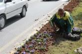 کاشت بیش از یک میلیون نهال و گل در سطح شهر شیراز