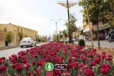 گزارش تصویری : گل کاری و زیبا سازی بلوار هجرت در استقبال از سال نو