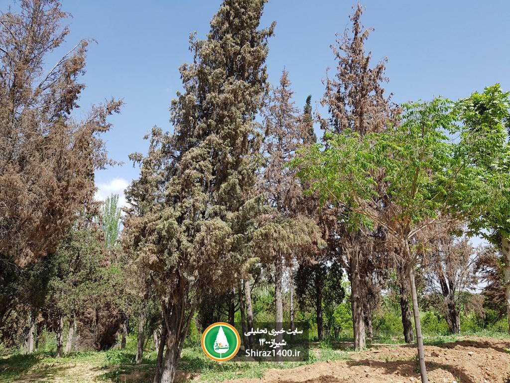 سرانجام تلخ درختان جابجا شده از برج درحال ساخت ابتدای نیایش