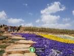 گزارش تصویری : افتتاح باغ گلهای شیراز