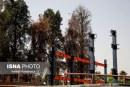 عکس: خشکاندن درختان ۱۵۰ ساله در شیراز