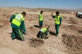 کاشت ١۶٠ هزار اصله درخت در شیراز