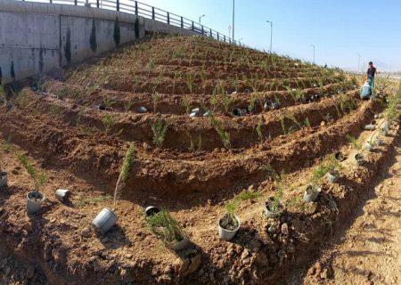 کاشت ۵۰۰ هزار اصله درخت تا پایان سال در شیراز