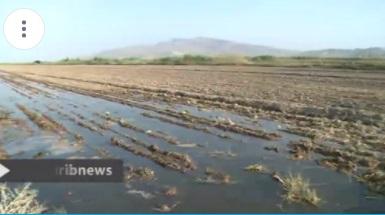 ویدئو: فاضلابی که به خورد گیاهان و دامها میرود